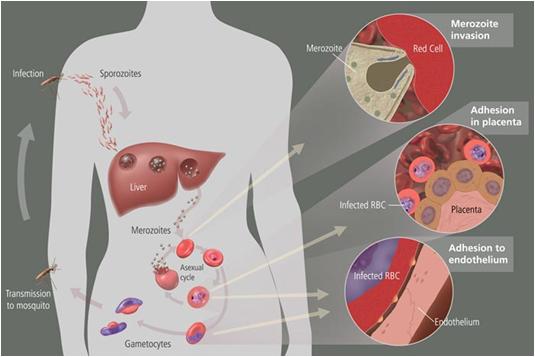parasitter i kroppen